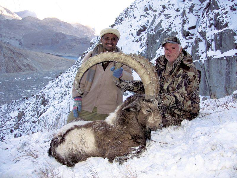 Himalayan ibex - photo#15
