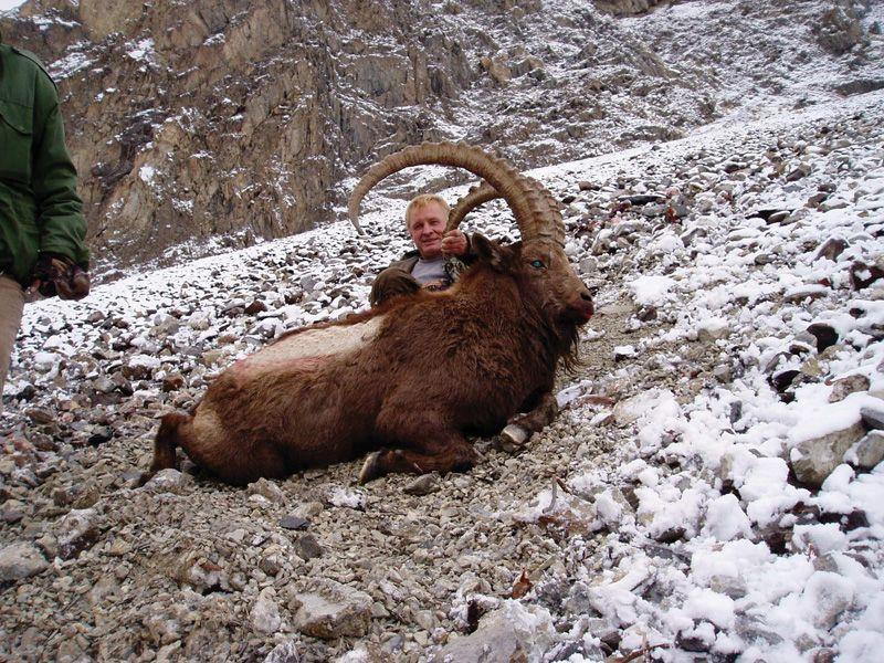 Himalayan ibex - photo#7