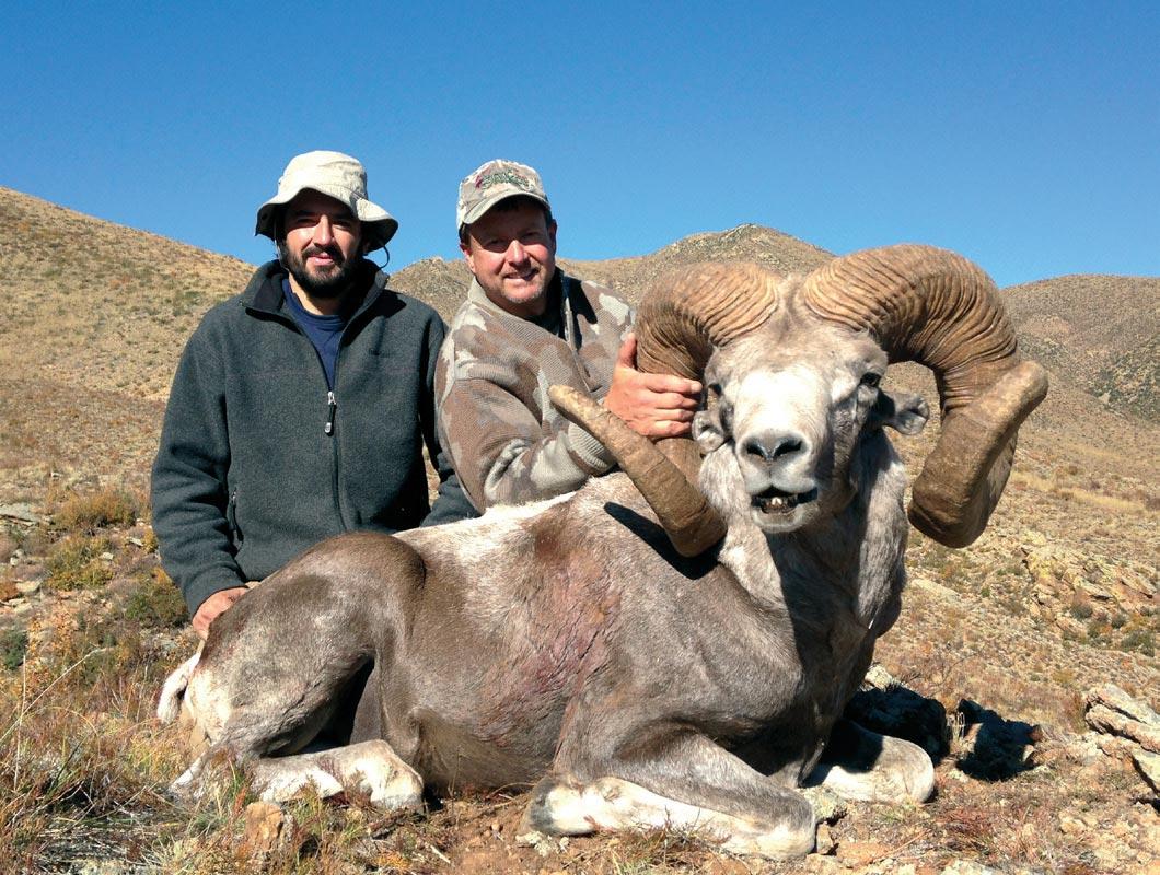 Ibex Goat Hangay Argali - Shikar...