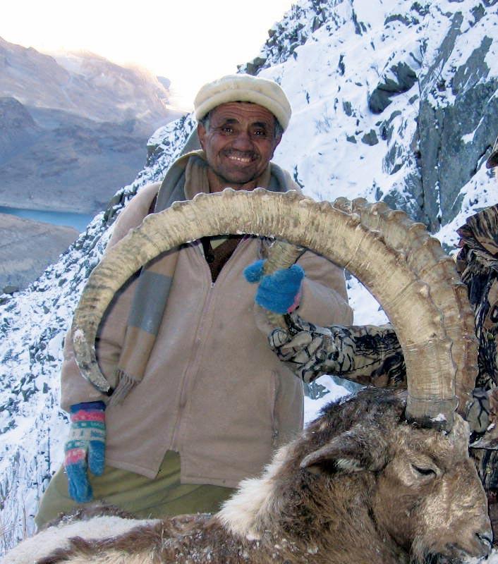 Himalayan ibex - photo#25