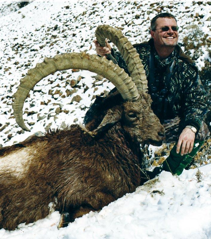 Himalayan ibex - photo#13