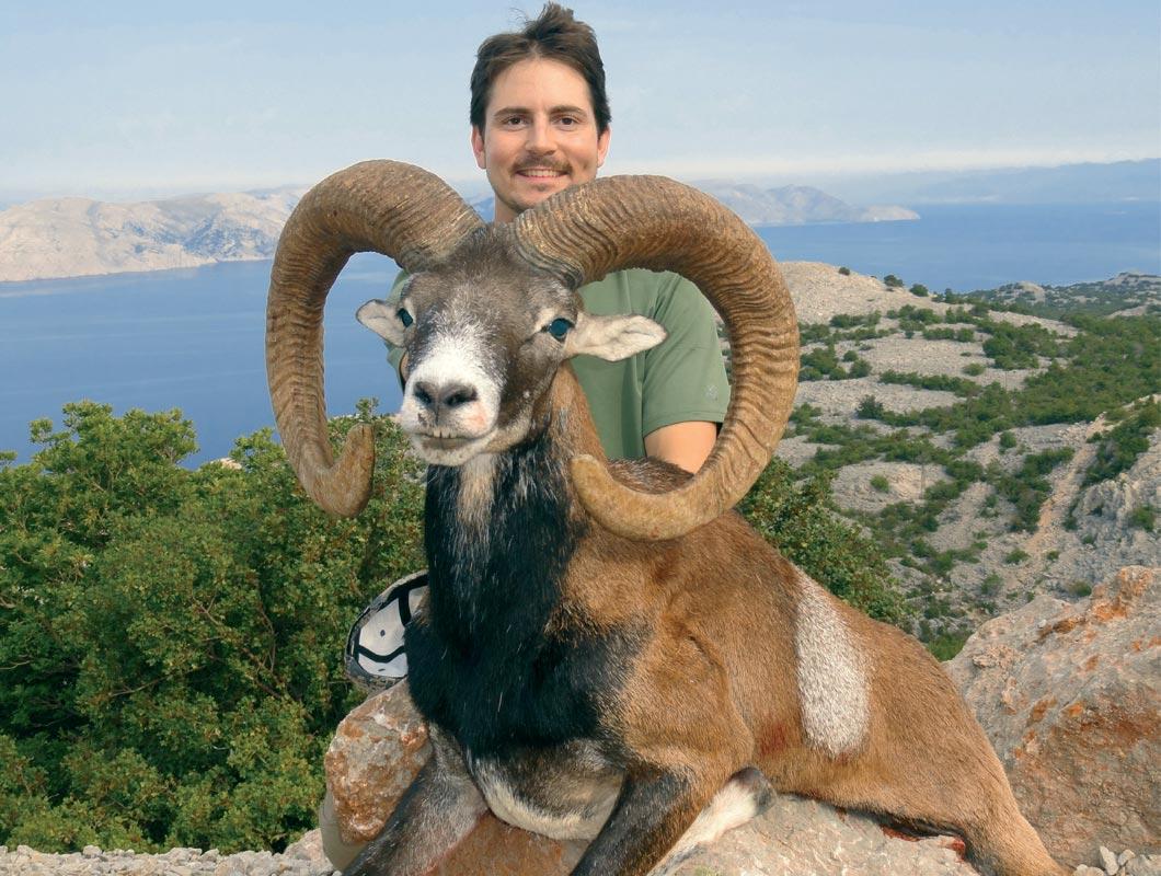 European Mouflon Croatia Shikar Safaris